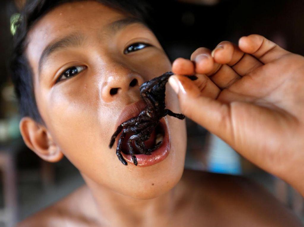 Warga Kamboja Konsumsi Tarantula untuk Makanan dan Obat