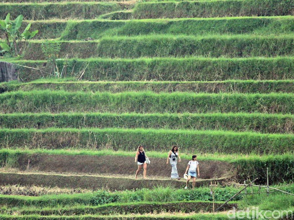 Mengenal Situs Budaya Indonesia yang Diakui UNESCO