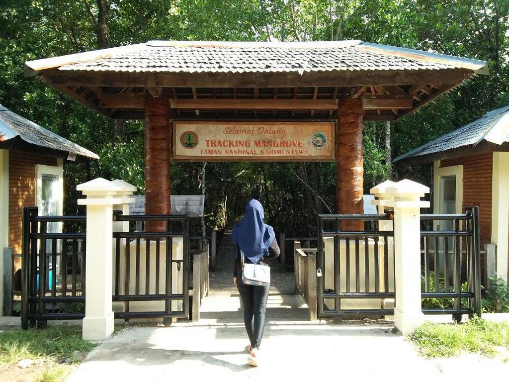 Lebaran Usai, Siapkan Liburan ke Hutan Mangrove Karimunjawa