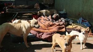 Mantan Pelukis Aborigin Terkenal Hidup Telantar Bersama Anjing