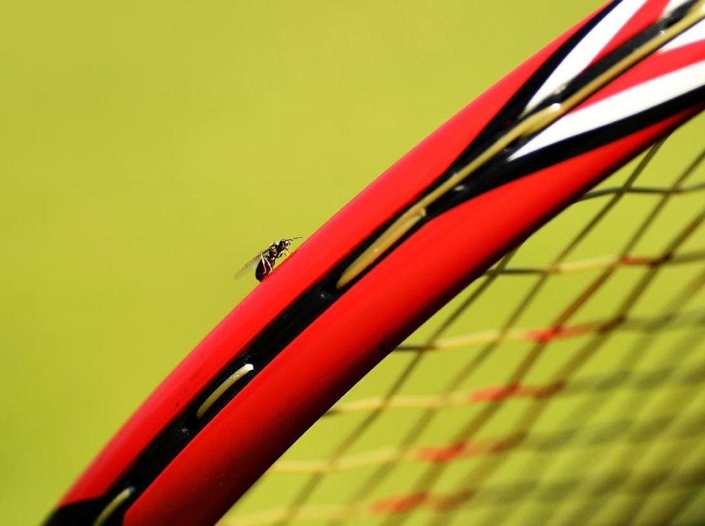 Ketika Semut-Semut Terbang Ganggu Pertandingan Wimbledon