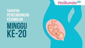 Tahapan Perkembangan Kehamilan: Minggu ke-20