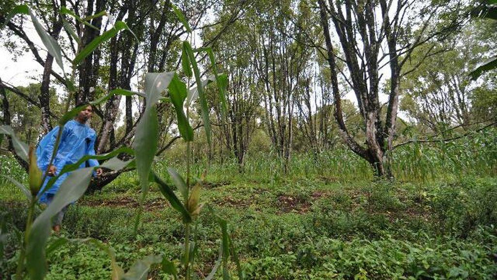 Foto: Panorama Hijau di Kaki Gunung Ijen