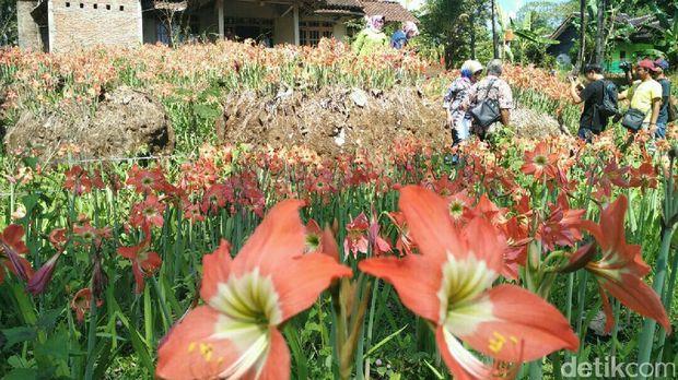 Bunga ini pun menarik wisatawan (Usman/detikTravel)