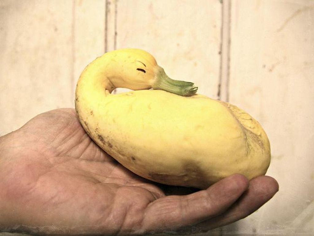Coba Tebak, Sayur dan Buah Ini Bentuknya Mirip Hewan Apa?