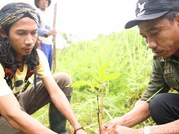 Menanam Pakan Favorit Badak Jawa
