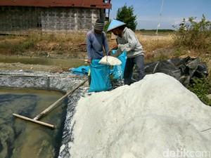 Pasokan di Daerah Langka, Petani Garam di Sidoarjo Panen Melimpah