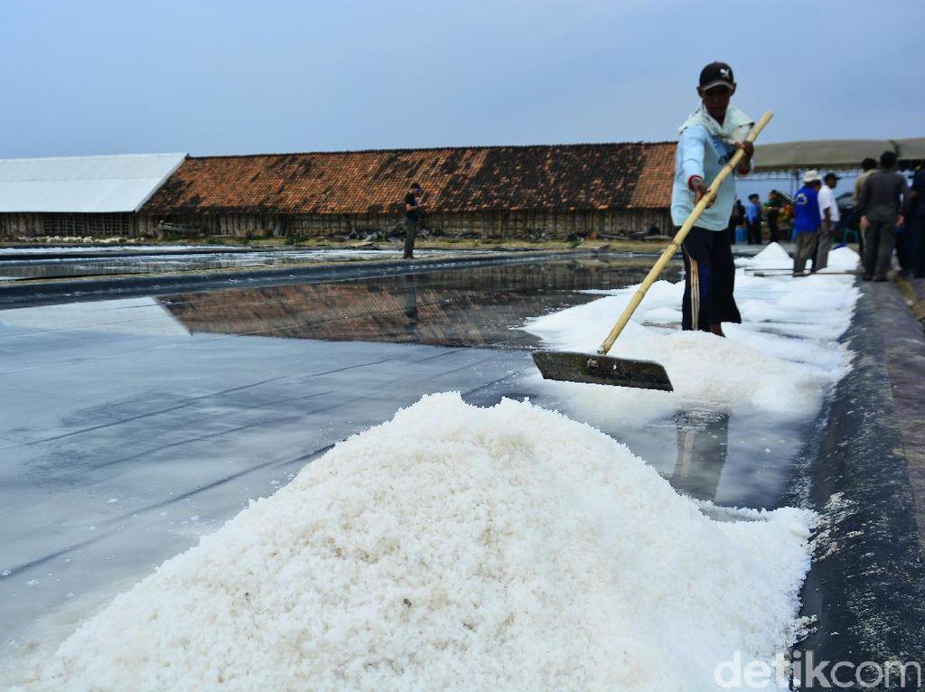 Ada 3.870 Ha Lahan Nganggur di NTT Bisa untuk Ladang Garam
