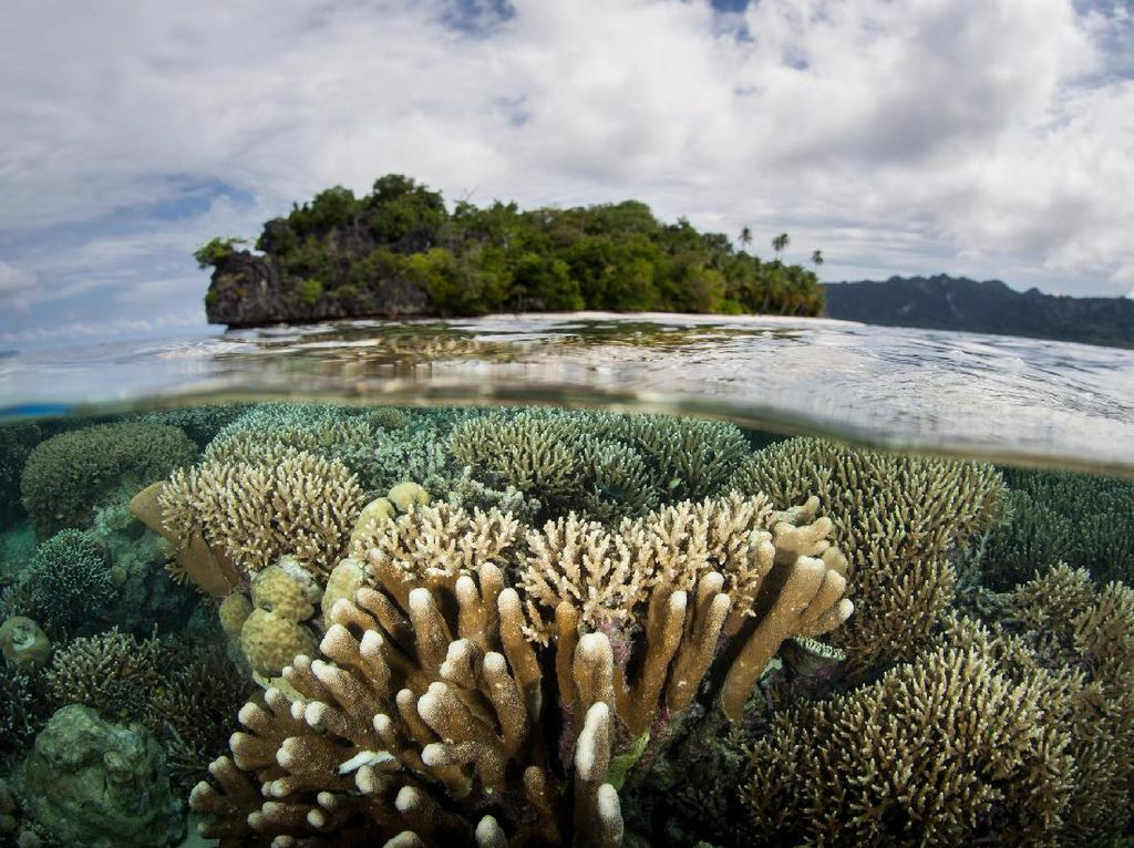 Foto: Alam Indonesia yang Bikin Bangga