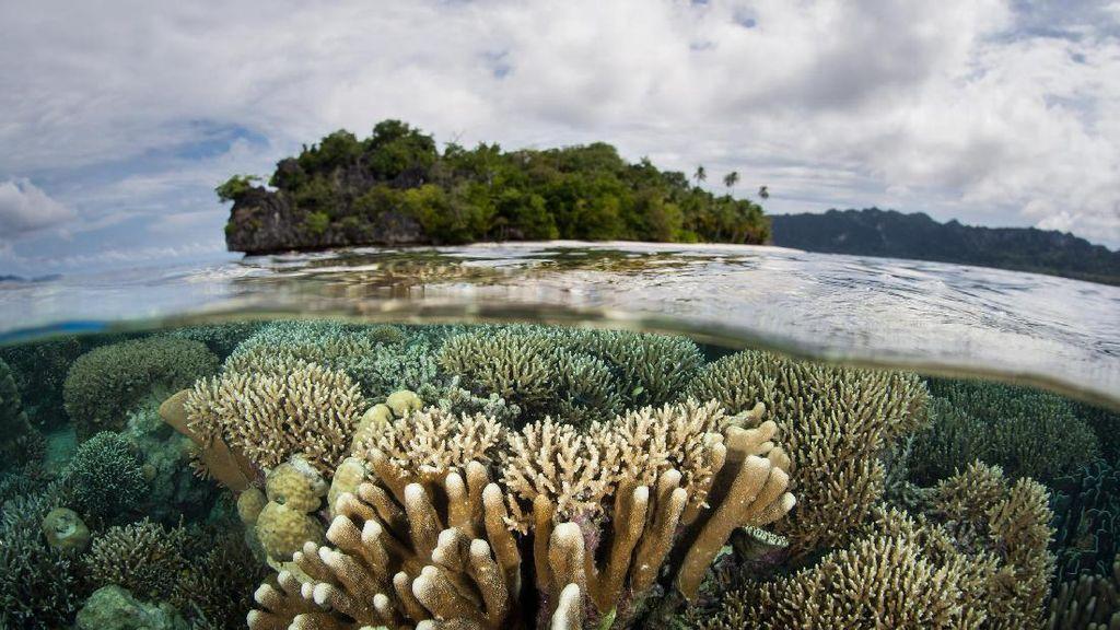 Foto: Bawah Laut Indonesia yang Jadi Terbaik di Asia