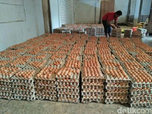 Harga Telur di Tingkat Peternak Ayam Blitar Tinggi