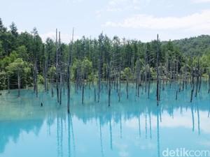 Bukan Photoshop, Ini Kolam Biru Sungguhan di Jepang