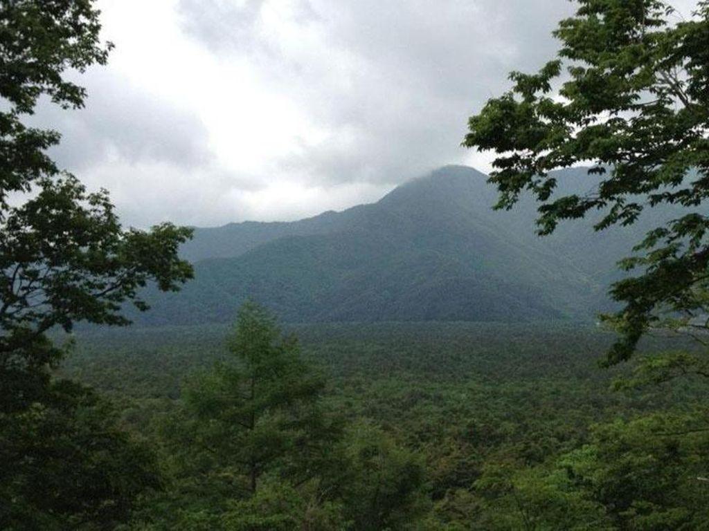 Foto: 5 Hutan Paling Berhantu di Dunia