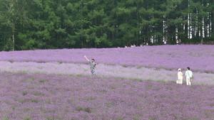 Bagai Lukisan, Inikah Kebun Lavender Terindah di Jepang?