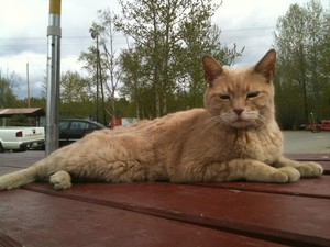 Cerita Kucing yang Jadi Walikota dan Dicintai Turis