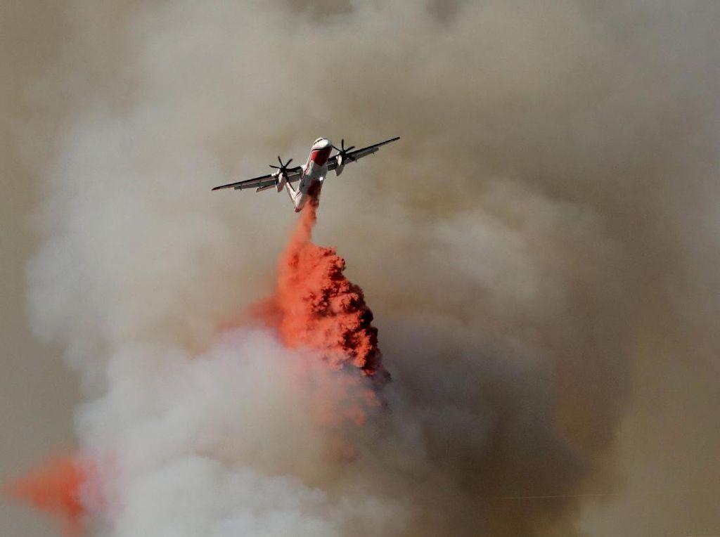 Foto: Aksi Pemadaman Kebakaran Hutan di Berbagai Belahan Dunia