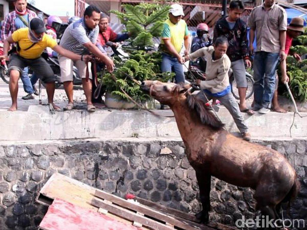Kasihan, Kuda Ini Tercebur Parit karena Kaget Diklakson Truk