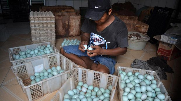 Peternak memilah telur bebek untuk diasinkan di rumah industri kampung bebek Desa Kebon Sari, Candi, Sidoarjo, Jawa Timur, Sabtu (22/7). Peternak bebek setempat mengeluhkan naiknya harga garam dari Rp150.000 menjadi Rp400.000 per 50 kilogram sehingga mengakibatkan naiknya biaya produksi telur asin. ANTARA FOTO/Umarul Faruq/kye/17