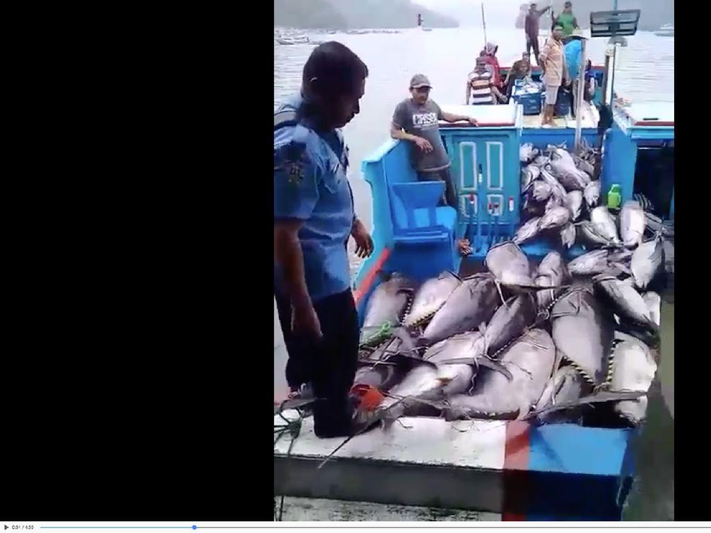 Berkat Gebrakan Susi, Nelayan di Malang Kebanjiran Tuna