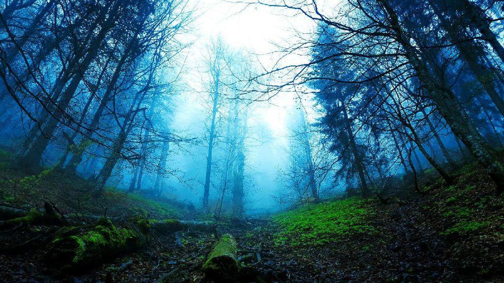 Foto: Seperti Apa Hutan Menyeramkan di Jerman?