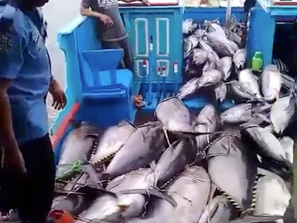 RI Genjot Ekspor Tuna, bakal Ada Pangkalan Ikan di Natuna