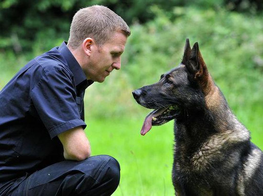 Berniat Kabur, Pencuri Ini Gigit Kepala Anjing Polisi