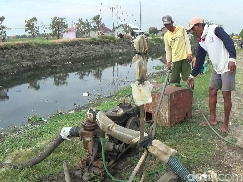 Kekeringan, Petani di Brebes Manfaatkan Air Limbah Untuk Irigasi
