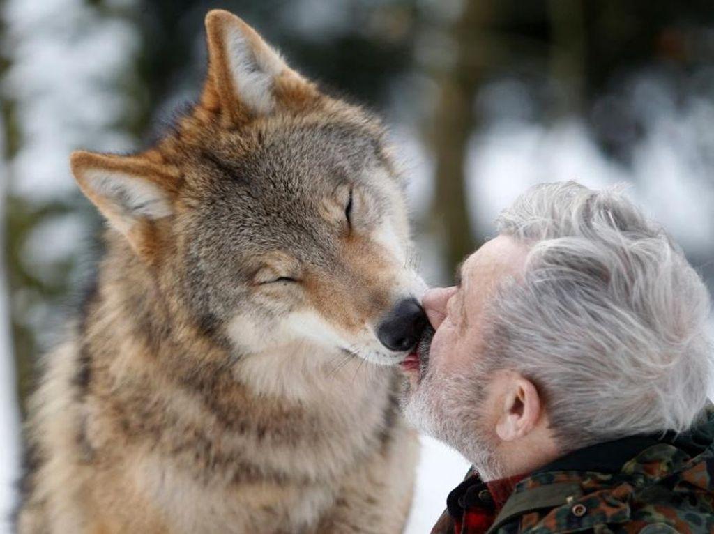 Foto: Manusia Setengah Serigala