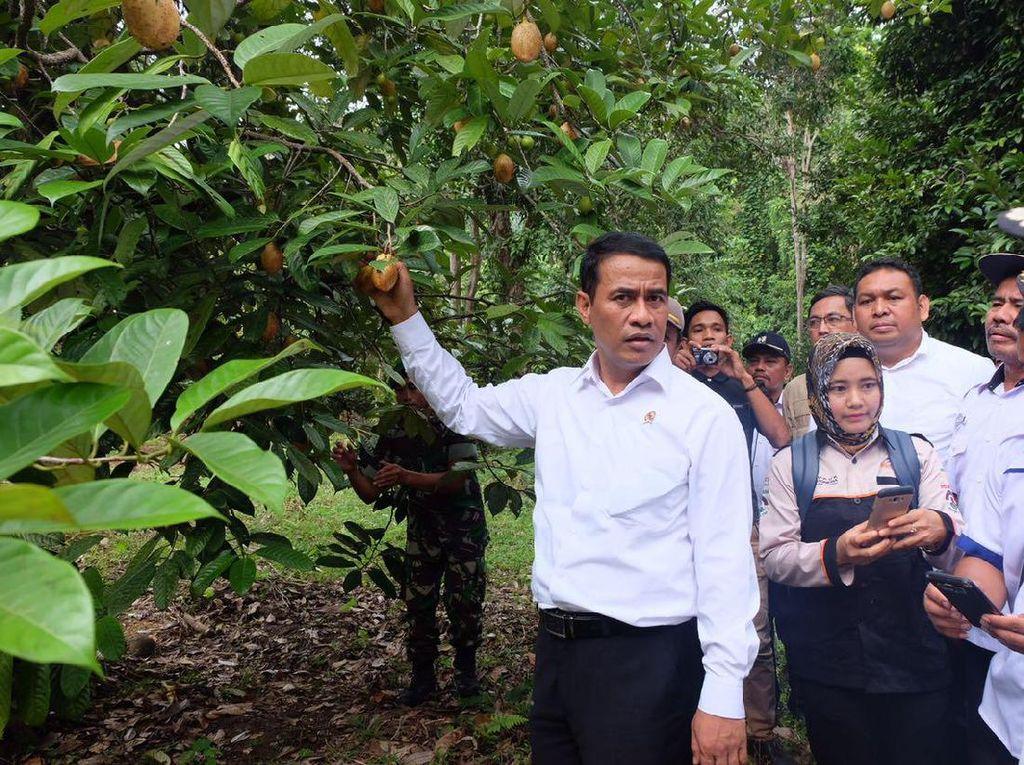 Kunjungi Pulau Terluar Sulawesi, Mentan Kagumi Pala dan Kelapa