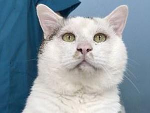 Kisah Kucing Lakukan Operasi Plastik di China Jadi Viral