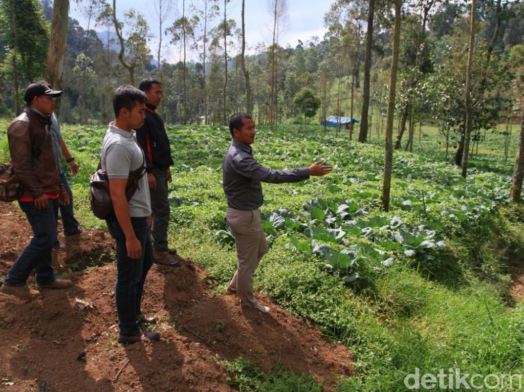 Ratusan Hektare Lahan Papandayan dan Gunung Tilu Beralih Fungsi