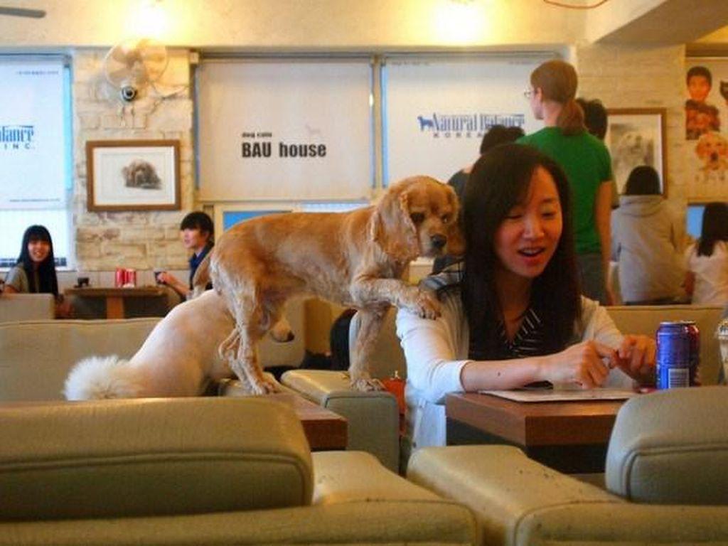 Sambil Ngopi dan Makan, Bisa Bermain dengan Hewan Lucu di 10 Kafe Ini!