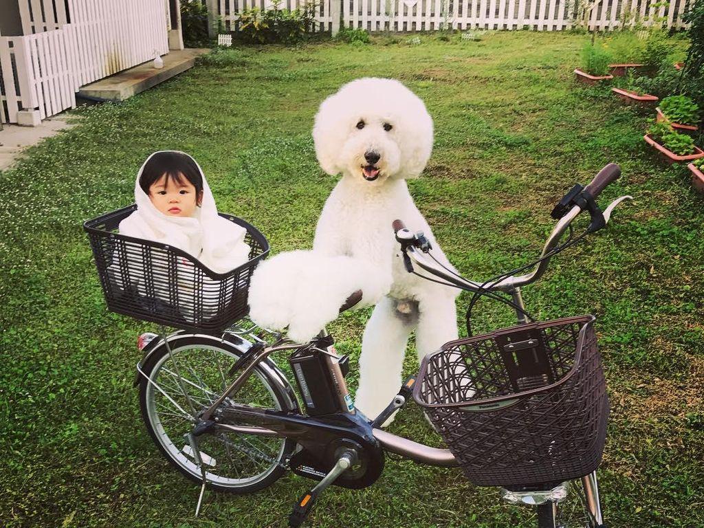 Gemes Banget! Bayi dan Anjing Ini Sering Pakai Baju Kembar