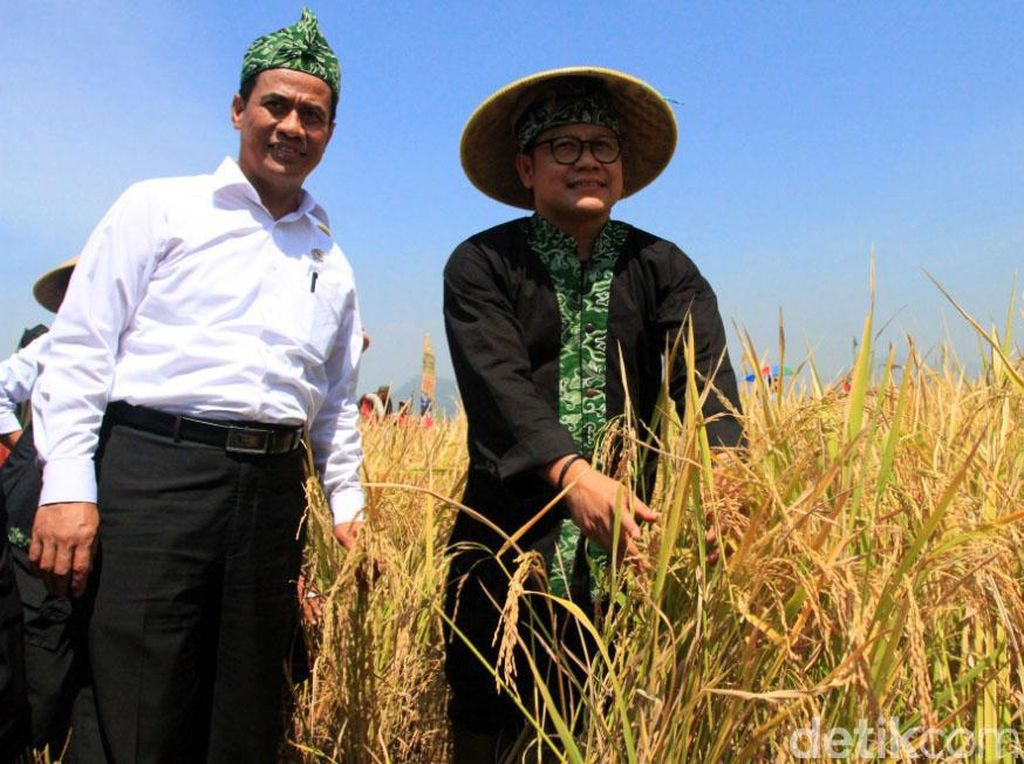 Mentan dan Cak Imin Panen Padi di Ciparay Bandung