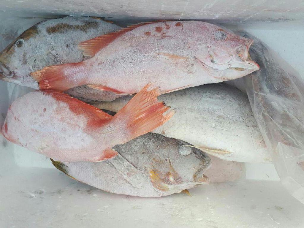 Ikan Asal Pangandaran Ramai Diekspor ke Korea Hingga China