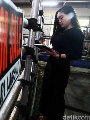 Jelang Idul Adha, Sapi Wagyu Dijual di Depok