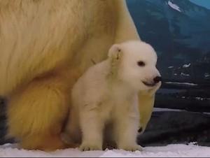 Bayi Beruang di Gold Coast Akhirnya Diberi Nama Mishka