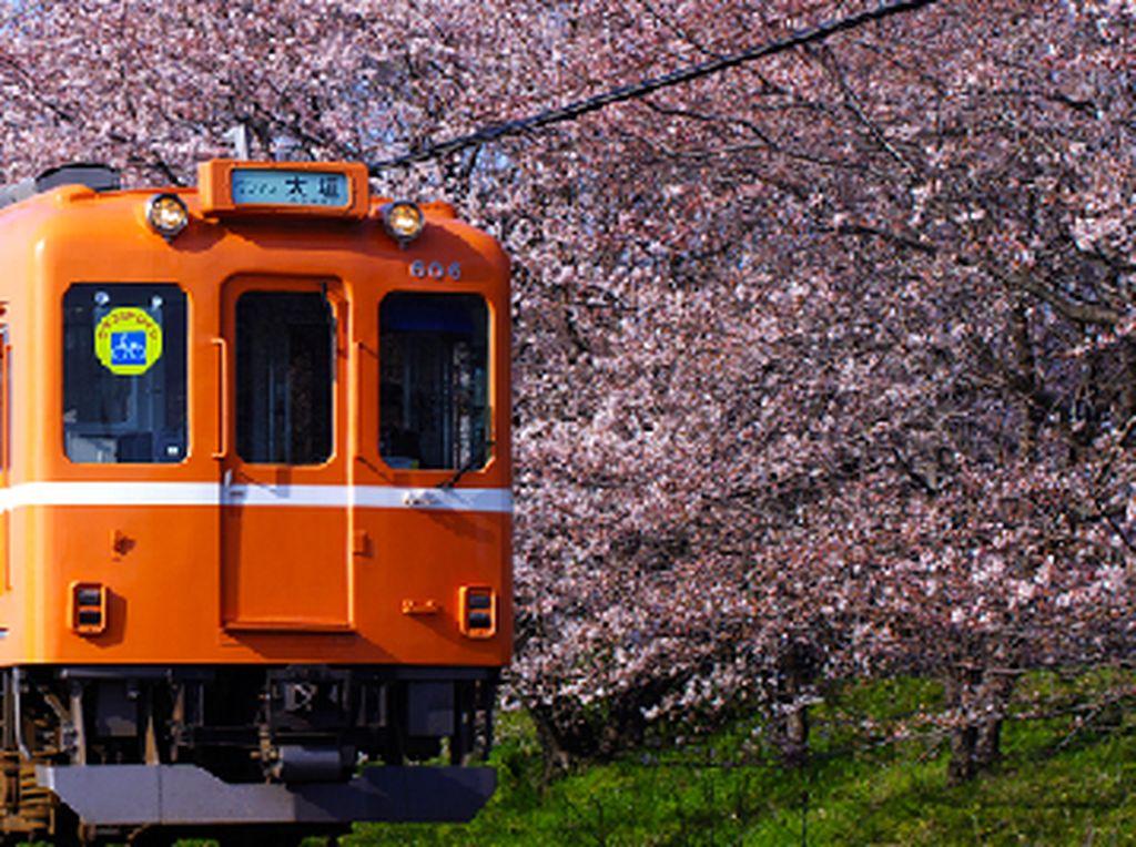 Yang Terbaru dari Jepang, Kafe Kucing di Dalam Kereta!