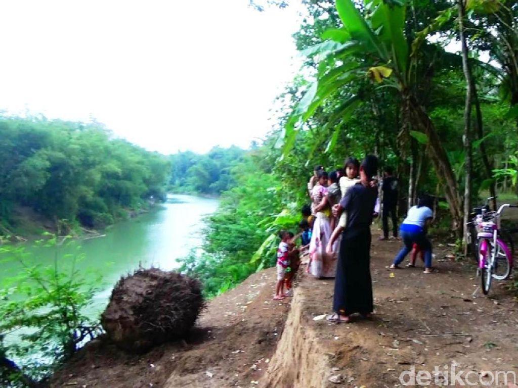 Kemunculan Buaya di Kebumen Jadi Objek Wisata Baru