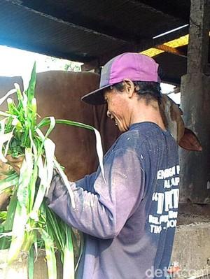 Penjual Hewan Kurban di Lamongan Sudah Mulai Diserbu Pembeli