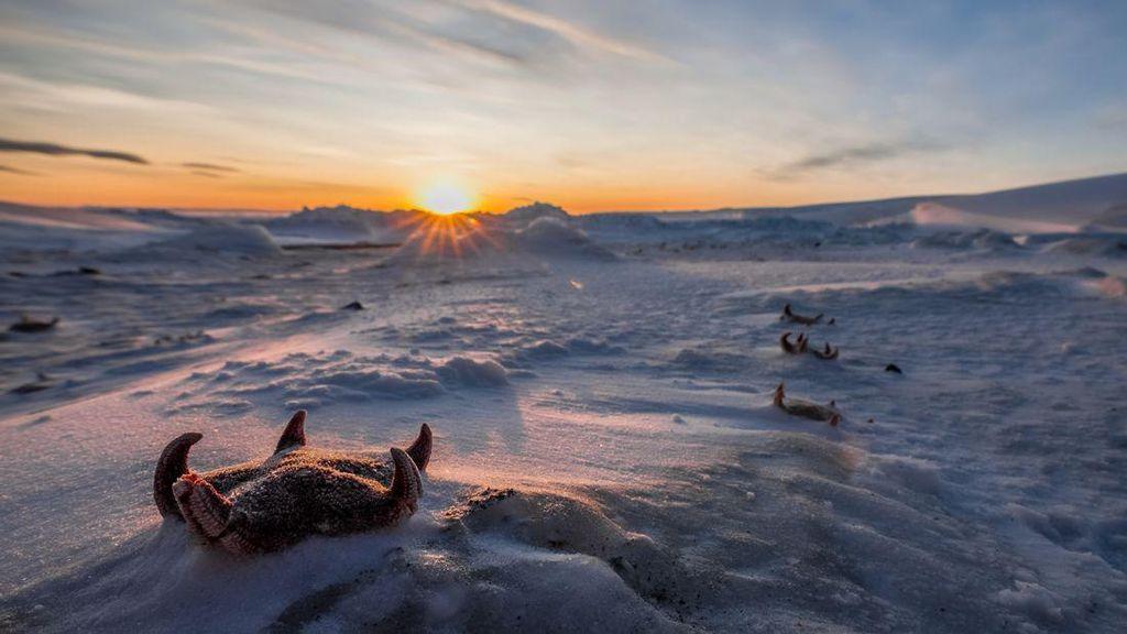 Foto: Kutub Selatan yang Belum Pernah Kamu Lihat