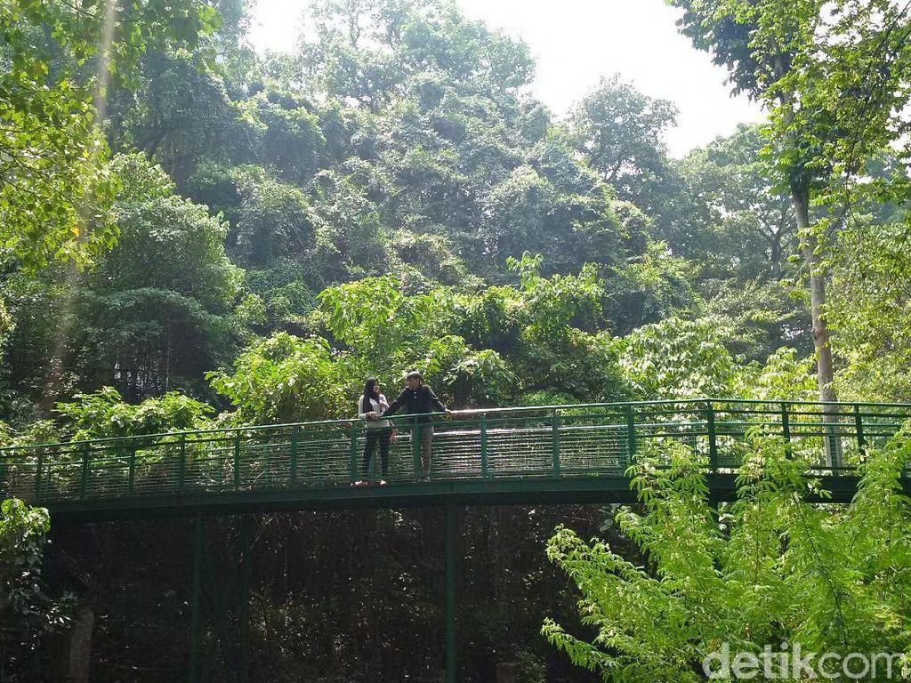 Pemkot Bandung Siapkan Rp 15 M untuk Menambah Panjang Forest Walk Baksil