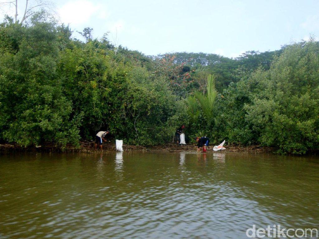 Bersih-bersih Sampah di Kampung Laut Cilacap