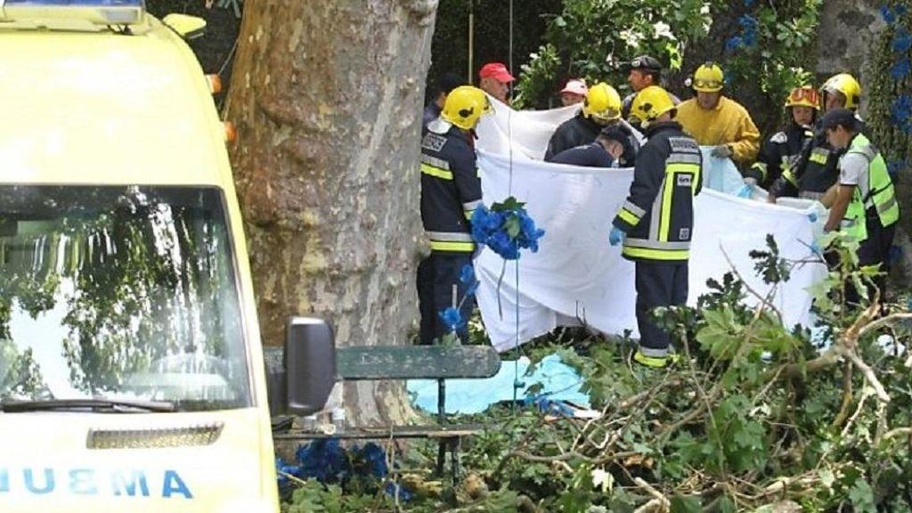 Pohon Tumbang Timpa Peziarah di Portugal, 13 Orang Tewas
