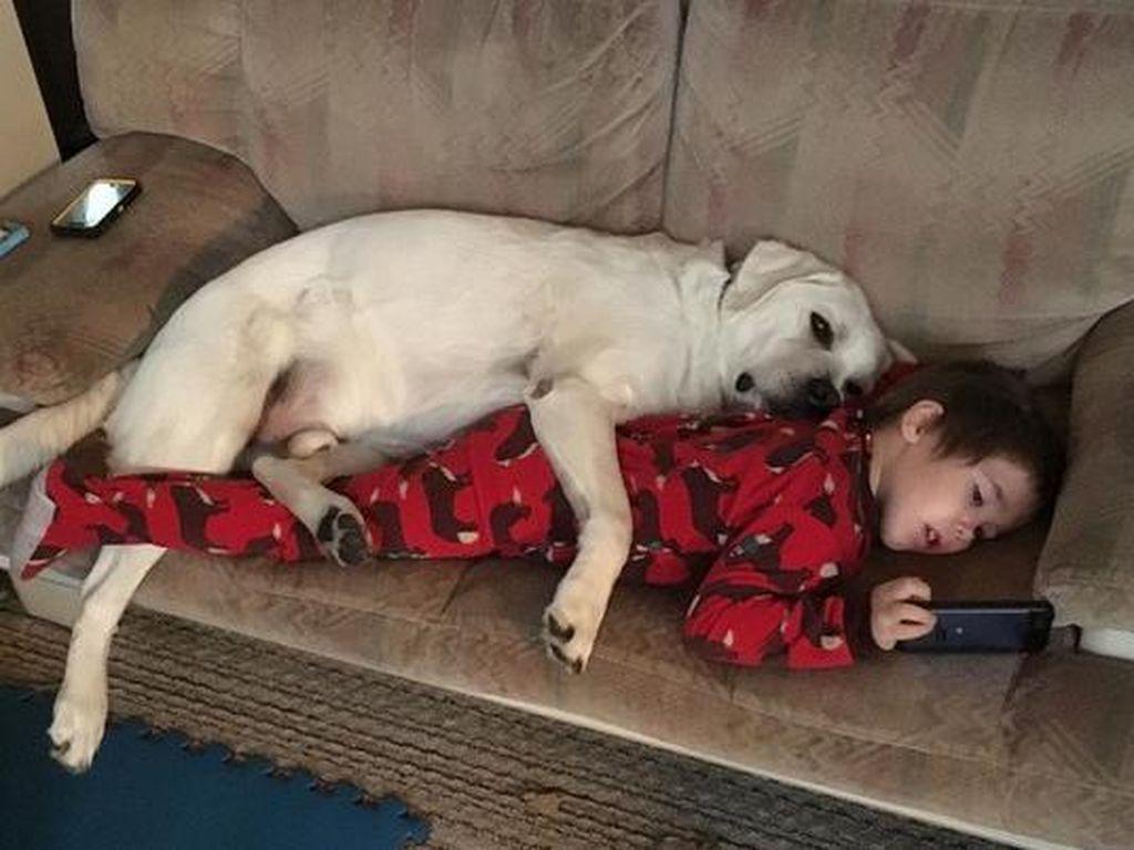 Kisah Anak dengan Autisme yang Tidak Bisa Tidur Tanpa Anjingnya
