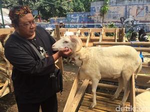 Petugas Temukan Ratusan Domba tidak Laik Kurban di Bandung
