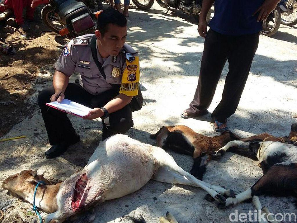 Agar Tak Dimakan Anjing Liar, Warga Diminta Pindahkan Ternak