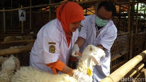 Waspadai Antraks, Pemkot Yogyakarta Periksa Hewan Kurban
