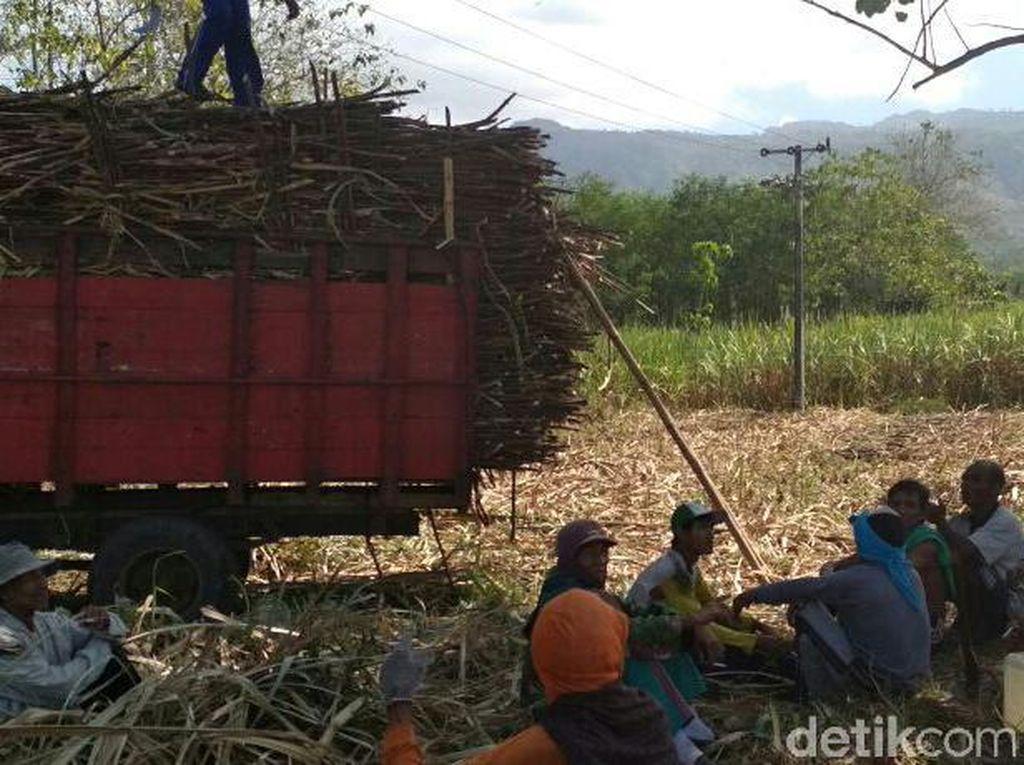 Petani Tebu Tolak Gula Rafinasi Dialihkan buat Konsumsi