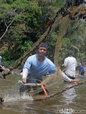 Pesta Parak Iwak, Ribuan Warga Berebut 2,3 Ton Ikan di Sungai Serayu
